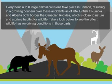 Here are some statistics on auto accidents caused by wild animals in Alberta and British Columbia.