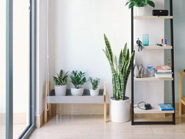 organized room with plants